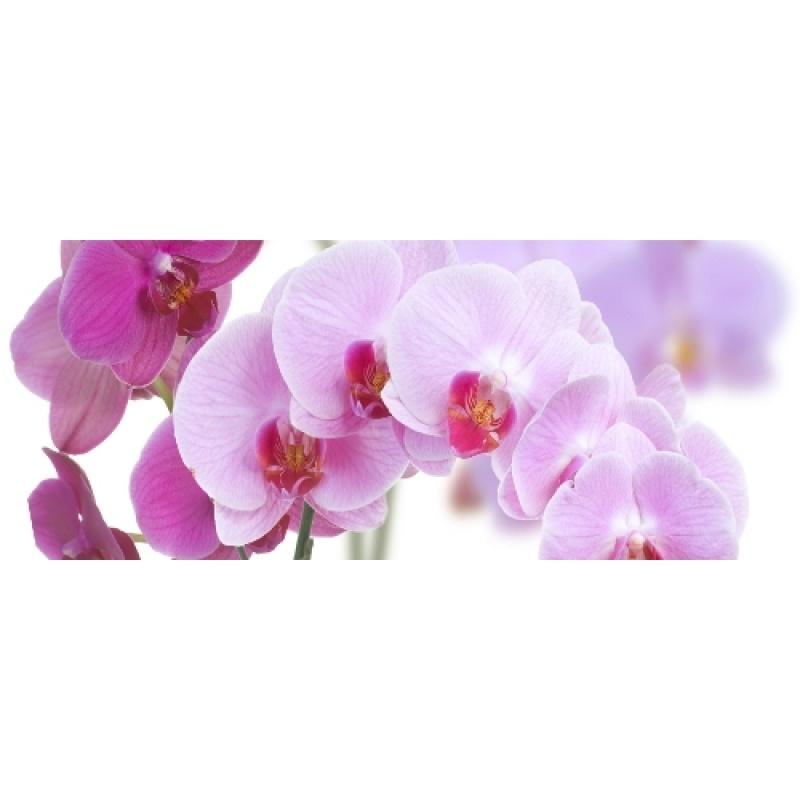 997256d28 CERROL Imperia Storczyk Bukiet Centro - Декор керамический настенный,  цветы, 20x50 см 508609